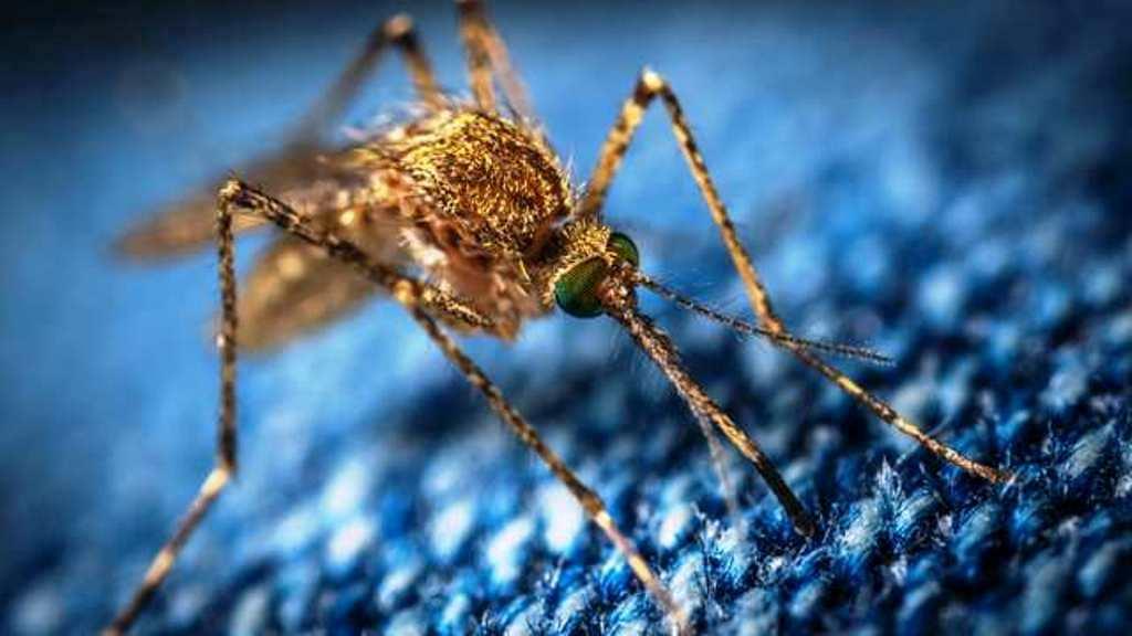 Mosquito Repellant Landscaping