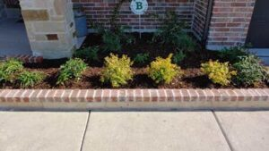 Bushes Planted Apart in Landscaping Bed