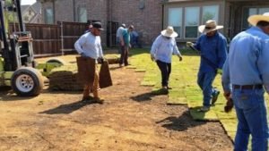 Landscaping Crew Sodding a New Lawn in Frisco, TX