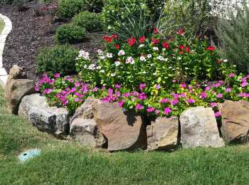 Natural Stone Flower Bed in Frisco TX front yard featuring Moss Rock boulders and Oklahoma chopped stone edging. The landscape beds are filled with Pansy annual flowers, desert native plants surrounded by green organic lawn grass.