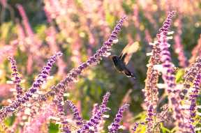 Plants to Attract Birds