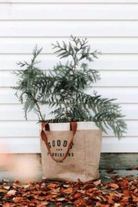 Protecting Plants with Burlap