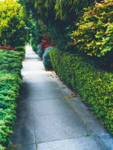 Pruned Trees and Shrubs