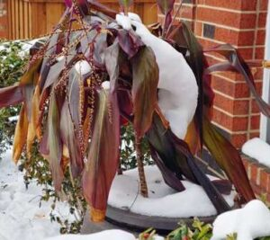 Protect Landscaping Plants From Freezing
